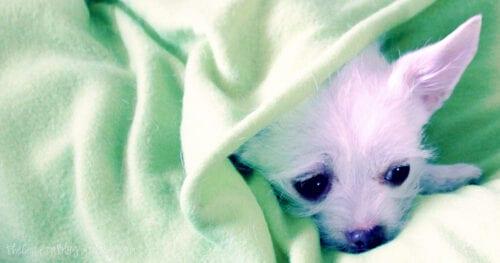 blanket dog bed tutorial 03