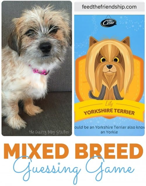 Do you play the dog guessing game when it comes to your pet's mixed breed? Get answers with the Feed the CESAR® Friendship kit and WISDOM PANEL® Canine DNA Test.