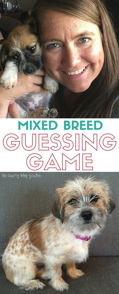 Do you play the dog guessing game when it comes to your pet's mixed breed? Get answers with theFeed the Friendship kit and WISDOM PANEL® Canine DNA Test