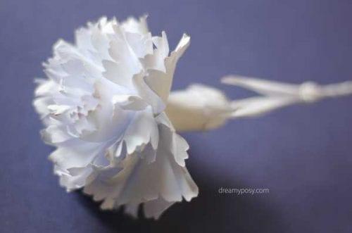 weiße Nelkenpapierblume