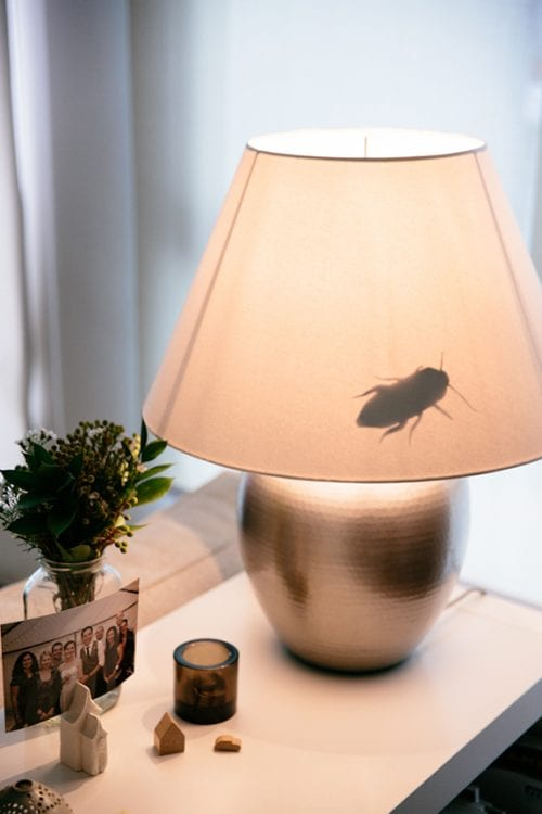 17 Crafty DIY April Fools Day Pranks featured by top US craft blog, The Crafty Blog Stalker: Creepy Crawly Lamp