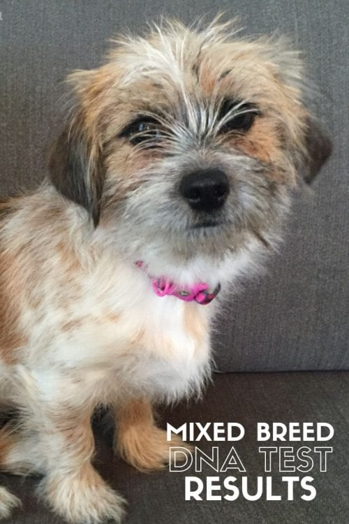Mixed Breed DNA Test Results, featured by top US craft blog, The Crafty Blog Stalker.