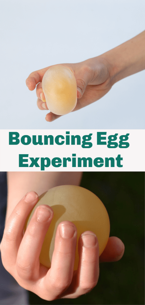 20 Fun Science Crafts for Kids you can Make at Home, featured by top US craft blog, The Crafty Blog Stalker: Bouncing Egg Experiment