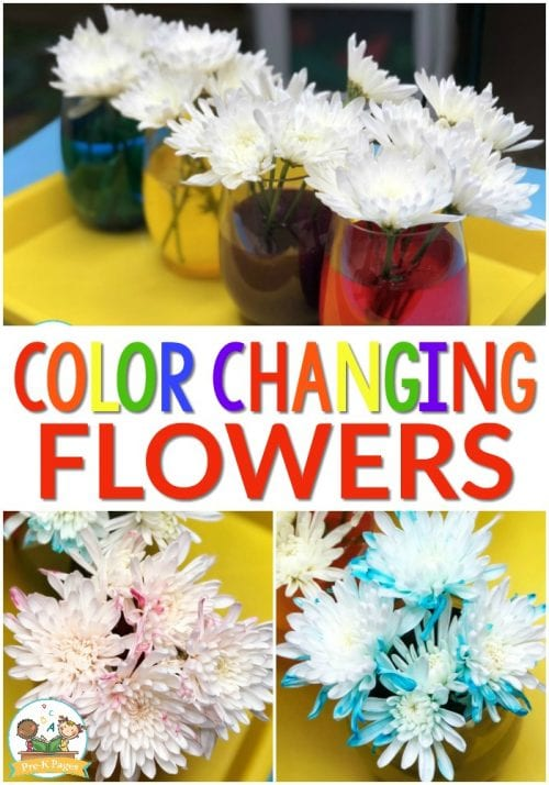 20 Fun Science Crafts for Kids you can Make at Home, featured by top US craft blog, The Crafty Blog Stalker: Color Changing Flowers