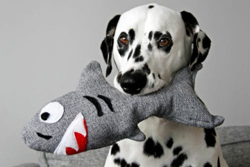 20 DIY Crafts for Dogs featured by top US craft blog, The Crafty Blog Stalker:  Squeaky Softy Shark Dog Toy