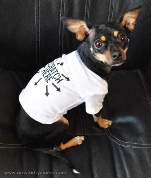 20 DIY Crafts for Dogs featured by top US craft blog, The Crafty Blog Stalker:  diy dog t-shirt