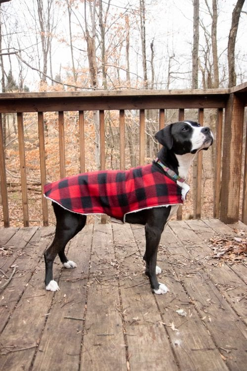 20 DIY Crafts for Dogs featured by top US craft blog, The Crafty Blog Stalker:  1-hour dog coat